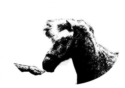 Praticien Cavasso - Horse Remedy - Loélia Beaufils