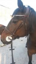 La lithothérapie pour chevaux ? testé et approuvé par Mon Cheval est une bombe !