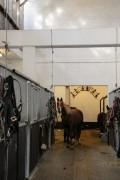 Les micro-organismes au service de nos chevaux !