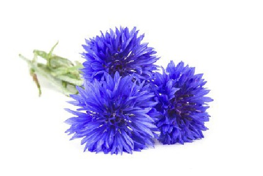 https://www.horseremedy.eu/287-thickbox/organic-floral-water-cornflower.jpg
