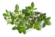 Thyme organic floral water