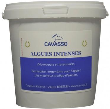 Algues intenses Premium