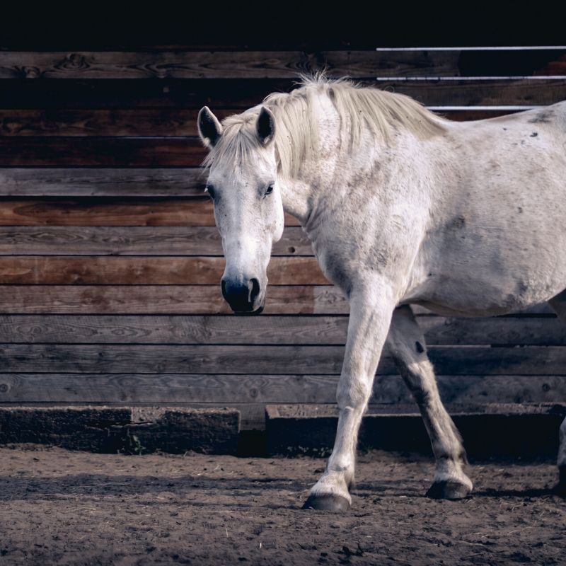 Pack Articulations Vieux Cheval