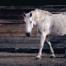 Gewricht Oud paard Pack