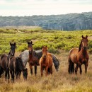 Gewricht van Jong Paard Pack