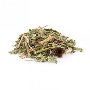 Echinacea bladeren