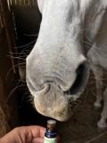 L'olfactothérapie équine